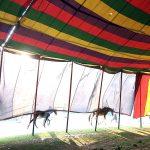 Bhaskar Das # The equine opera 3